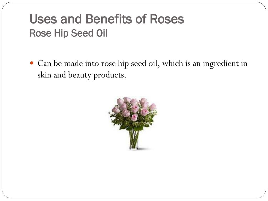 Uses and Benefits of Roses