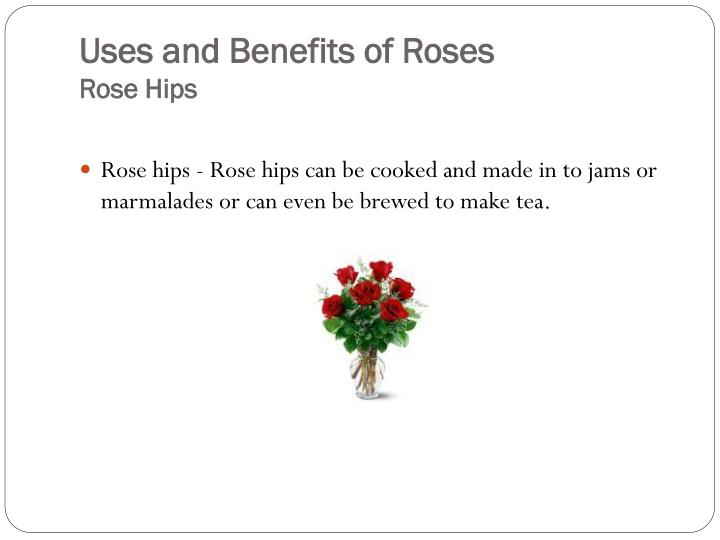 Uses and benefits of roses rose hips
