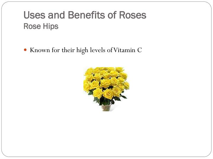 Uses and benefits of roses rose hips3