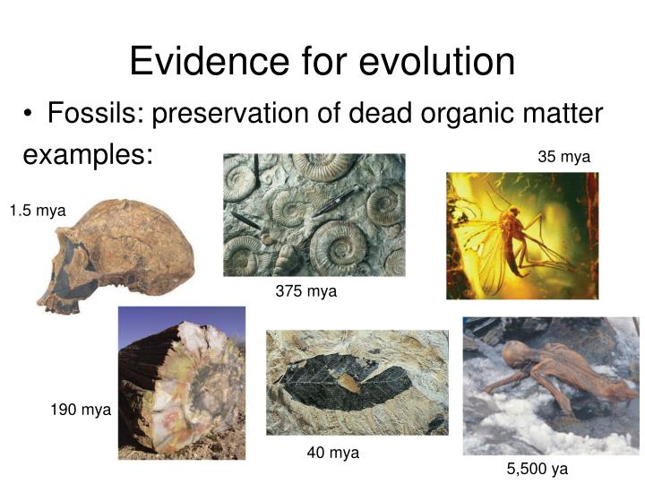 Evidence for evolution