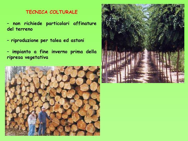 TECNICA COLTURALE