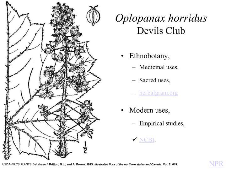 Oplopanax horridus