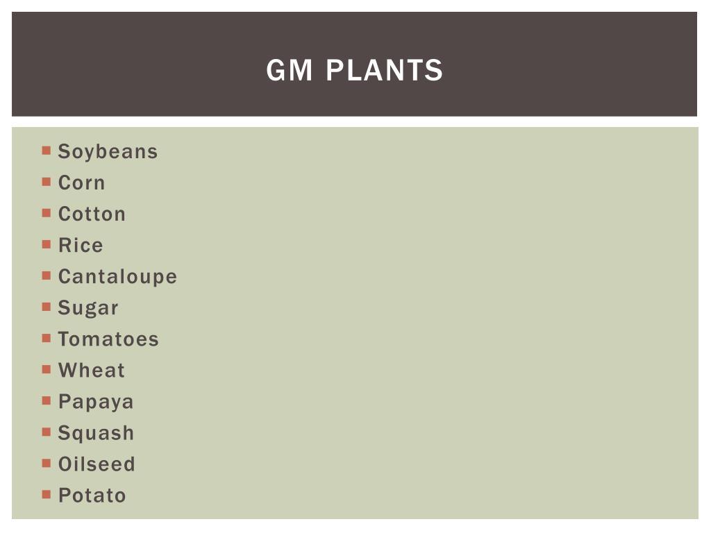 GM Plants