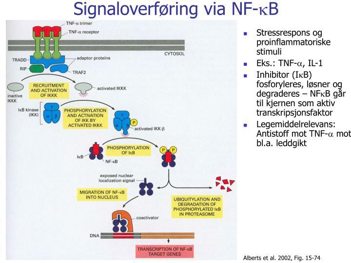 Signaloverføring via NF-