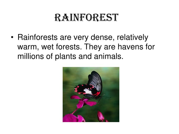 Rainforest1