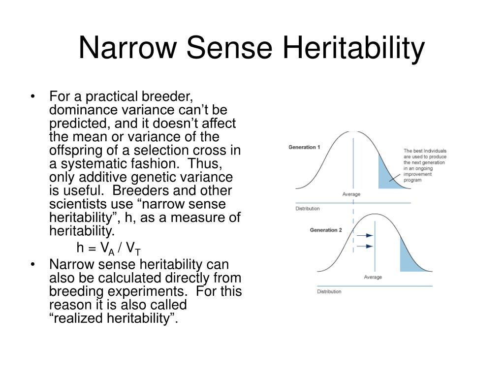 Narrow Sense Heritability