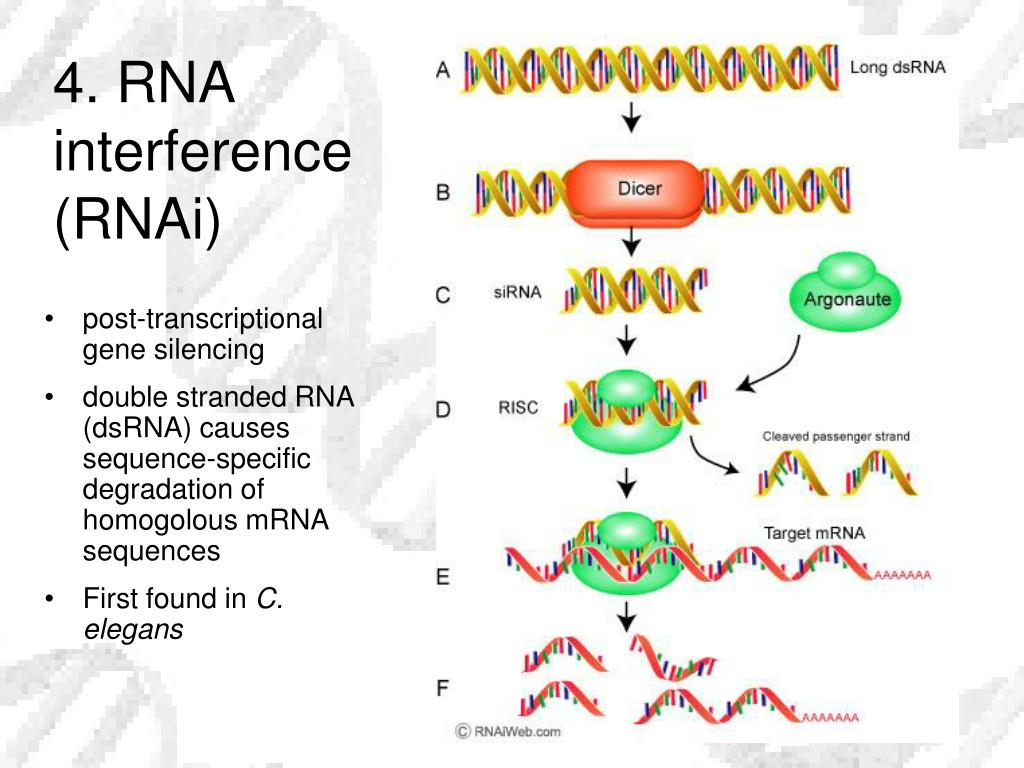 4. RNA