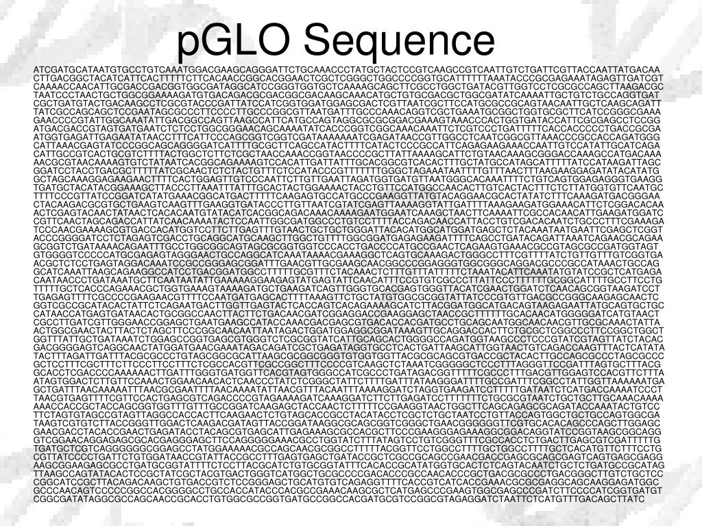 pGLO Sequence