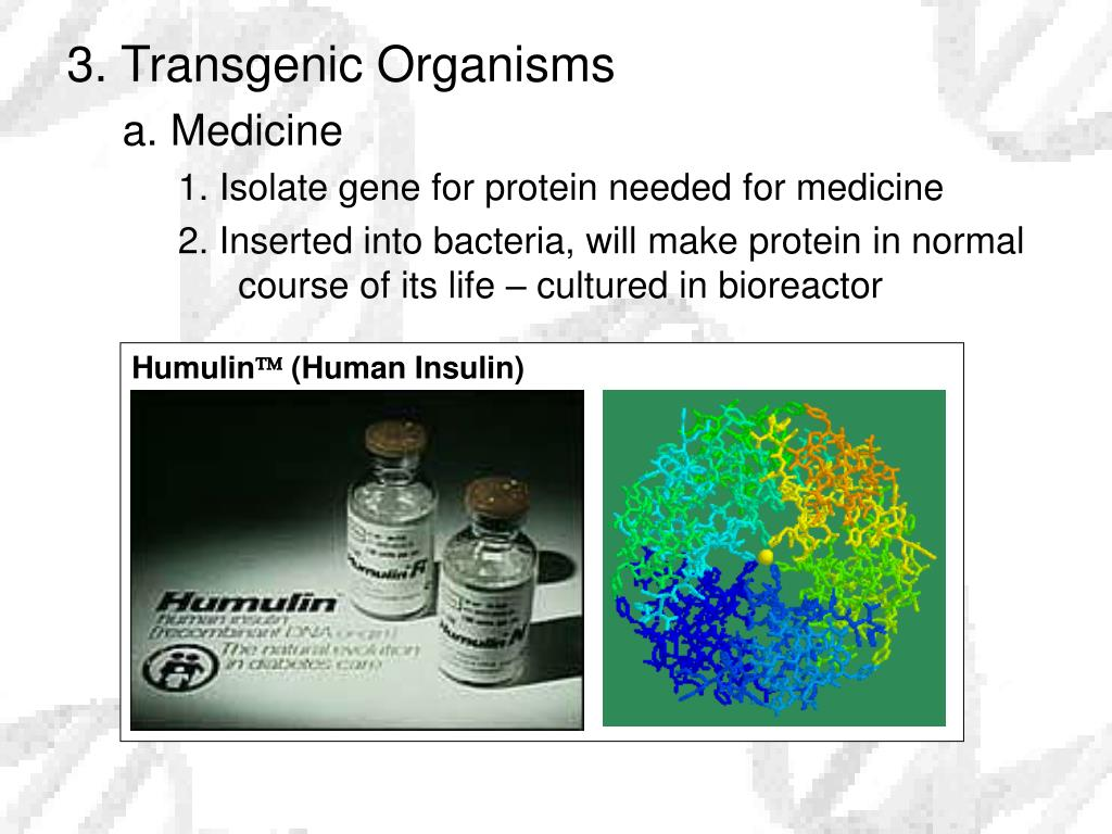 3. Transgenic Organisms