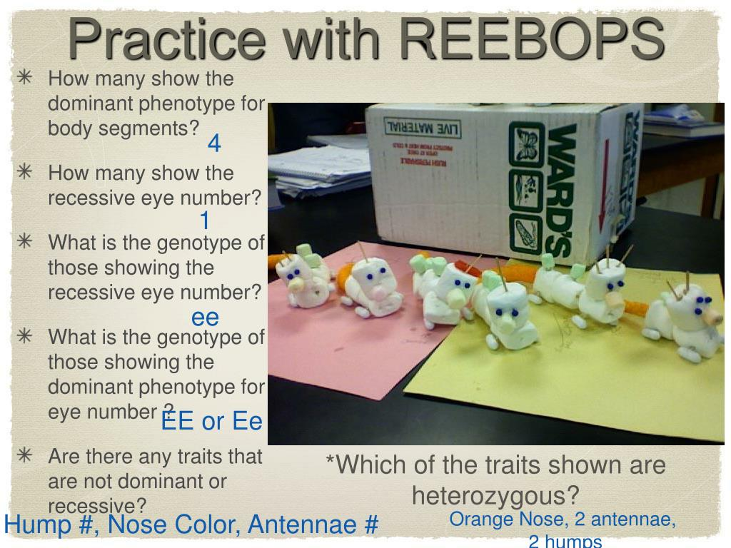Practice with REEBOPS