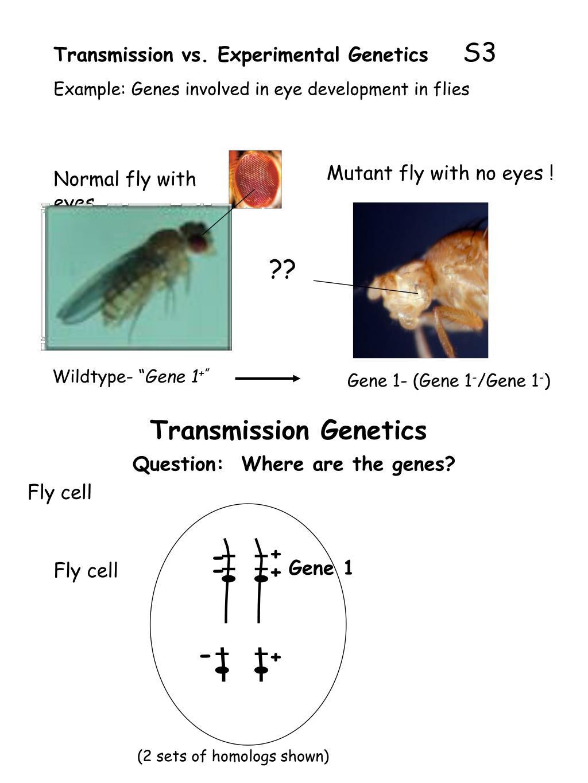 Transmission vs. Experimental Genetics