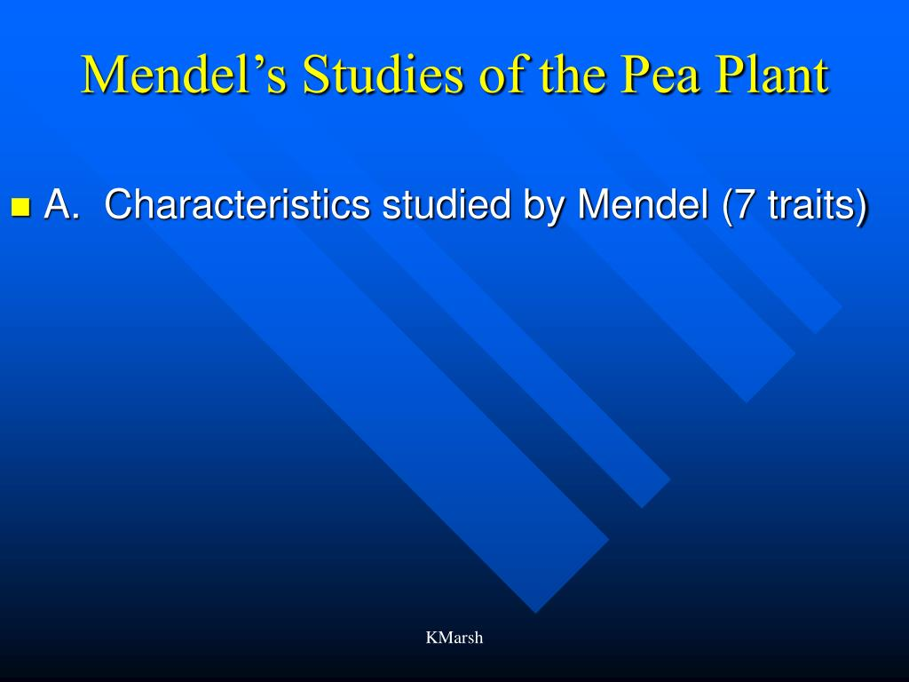 Mendel's Studies of the Pea Plant
