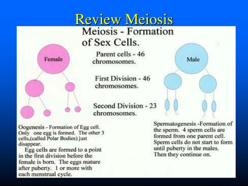 Review Meiosis