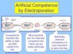 artificial competence by electroporation