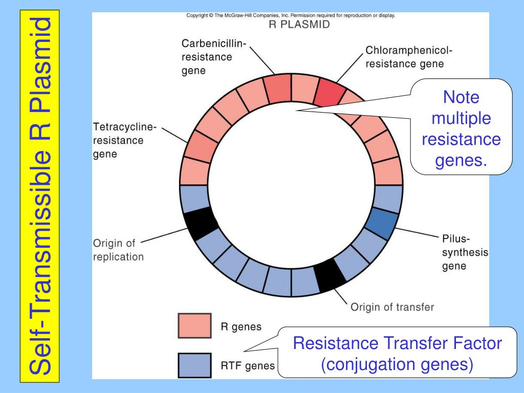 Self-Transmissible R Plasmid