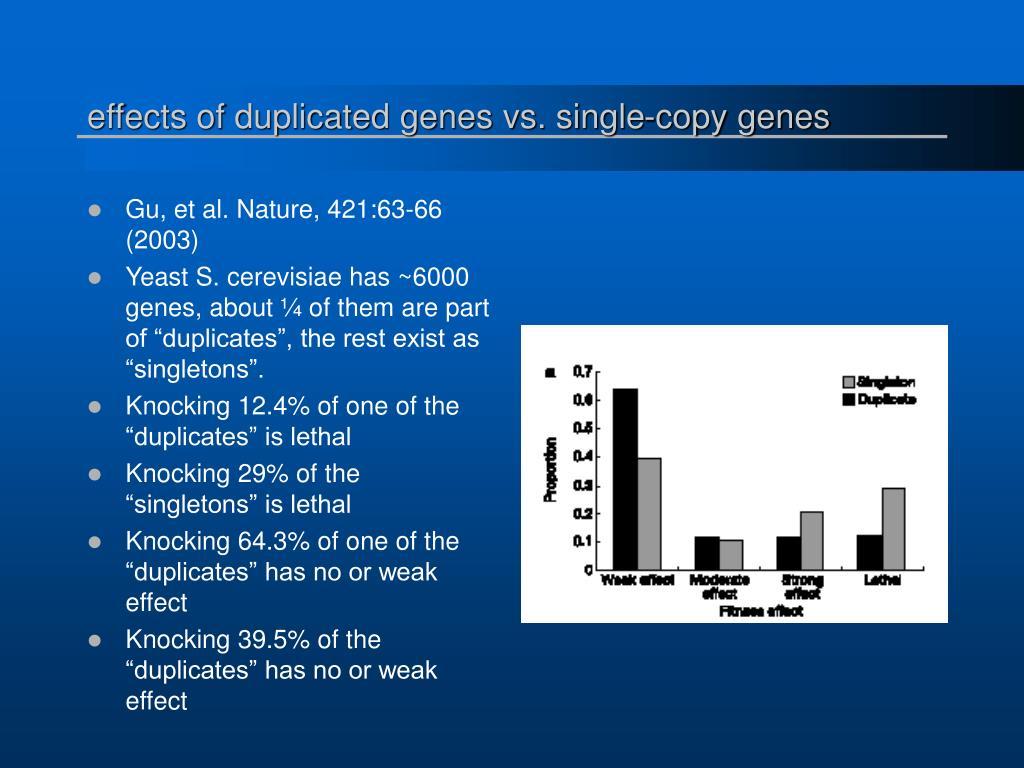 effects of duplicated genes vs. single-copy genes