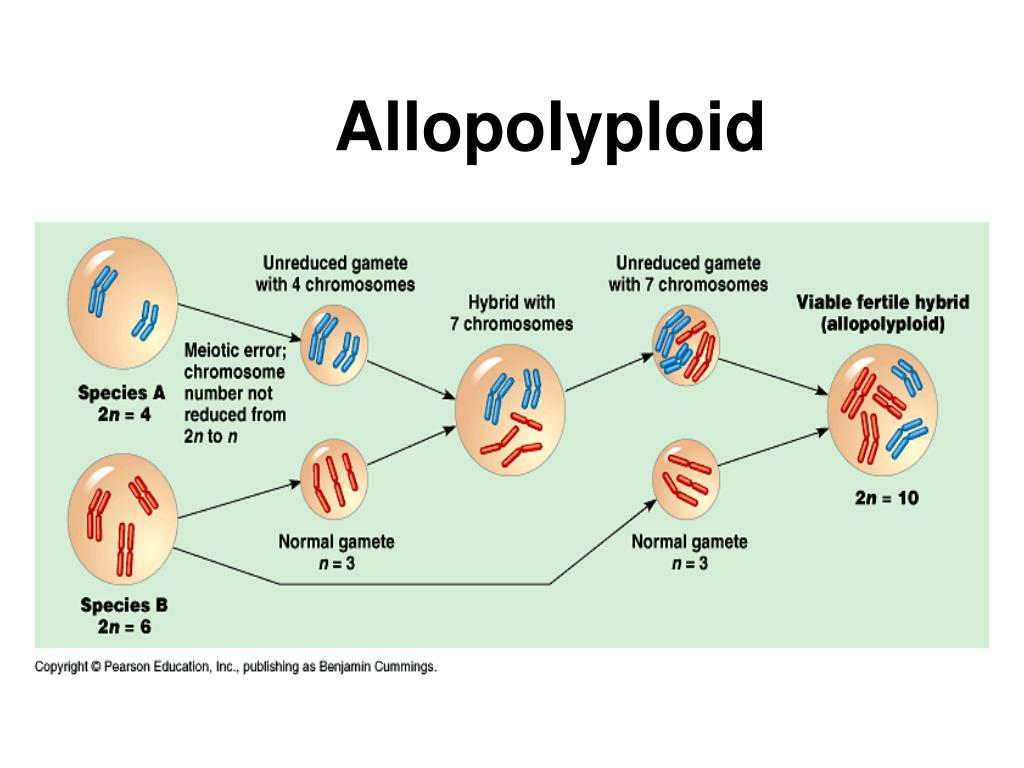 Allopolyploid