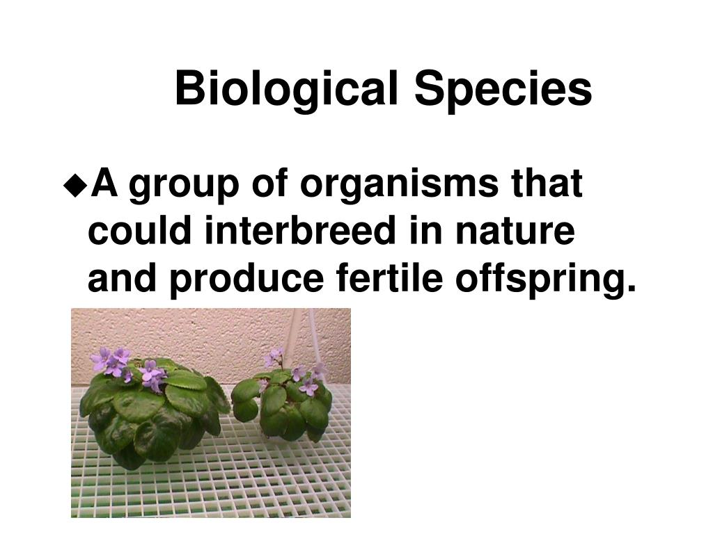 Biological Species