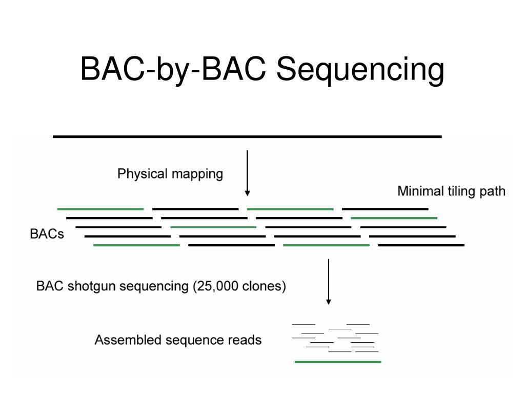 BAC-by-BAC Sequencing