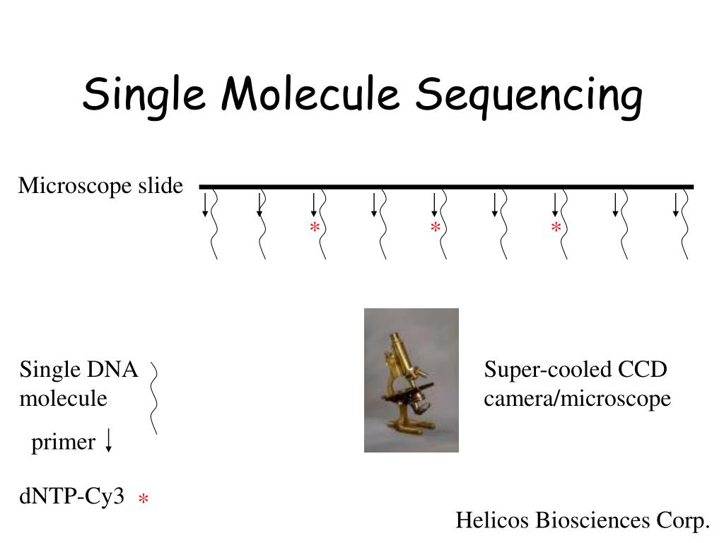 Single Molecule Sequencing