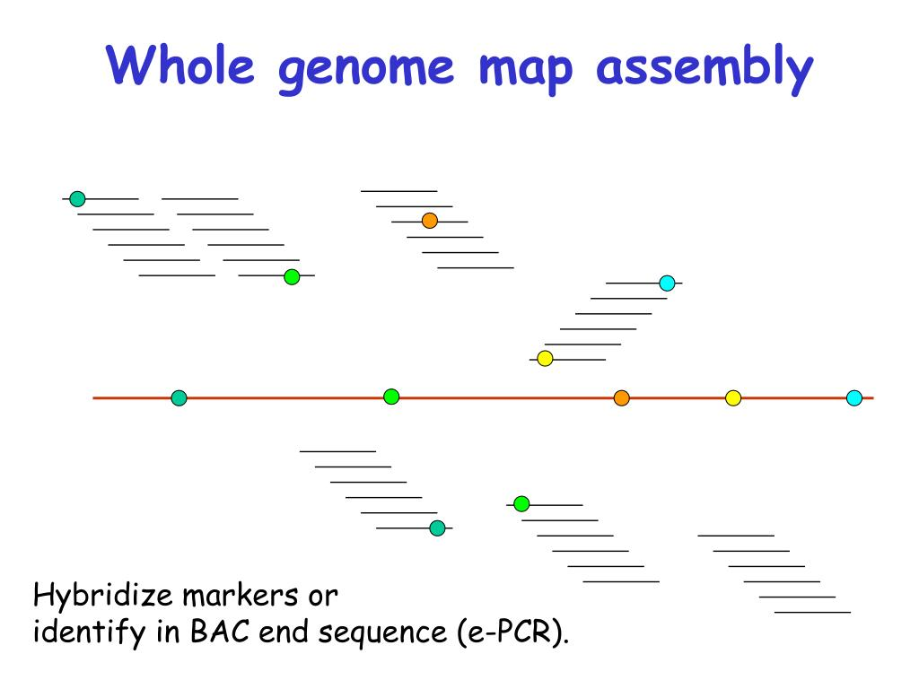 Whole genome map assembly