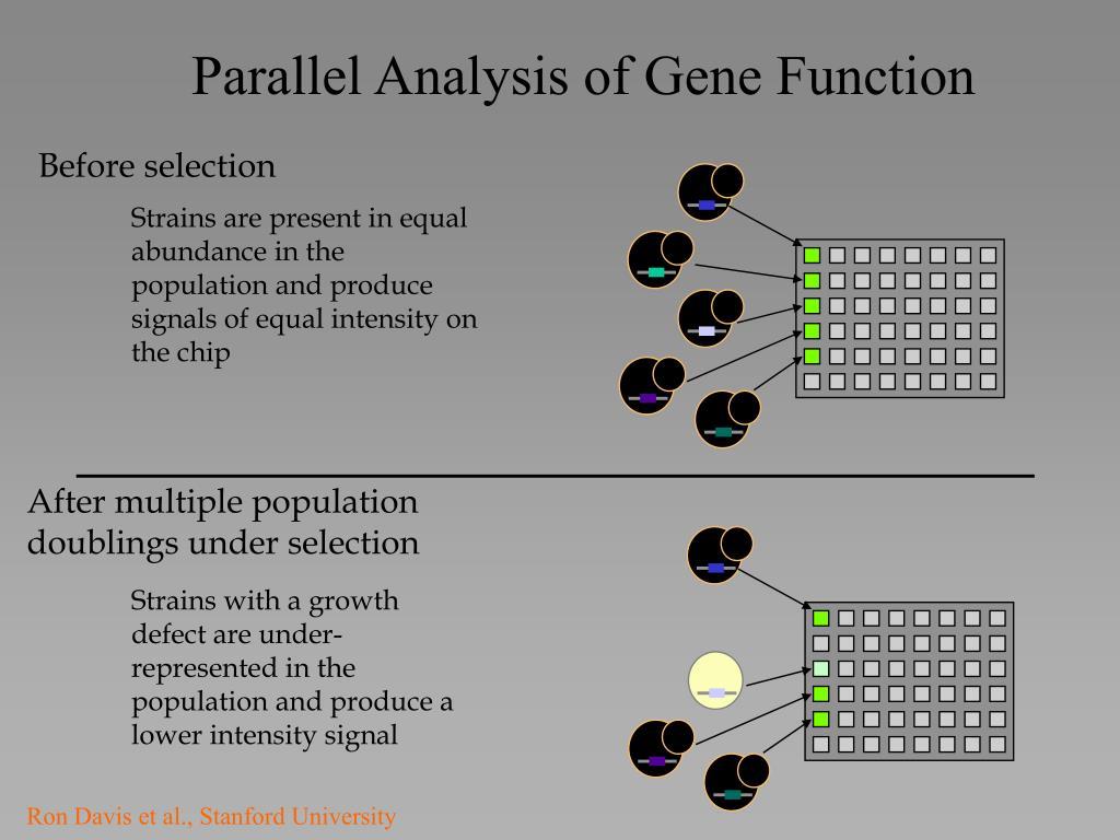 Parallel Analysis of Gene Function