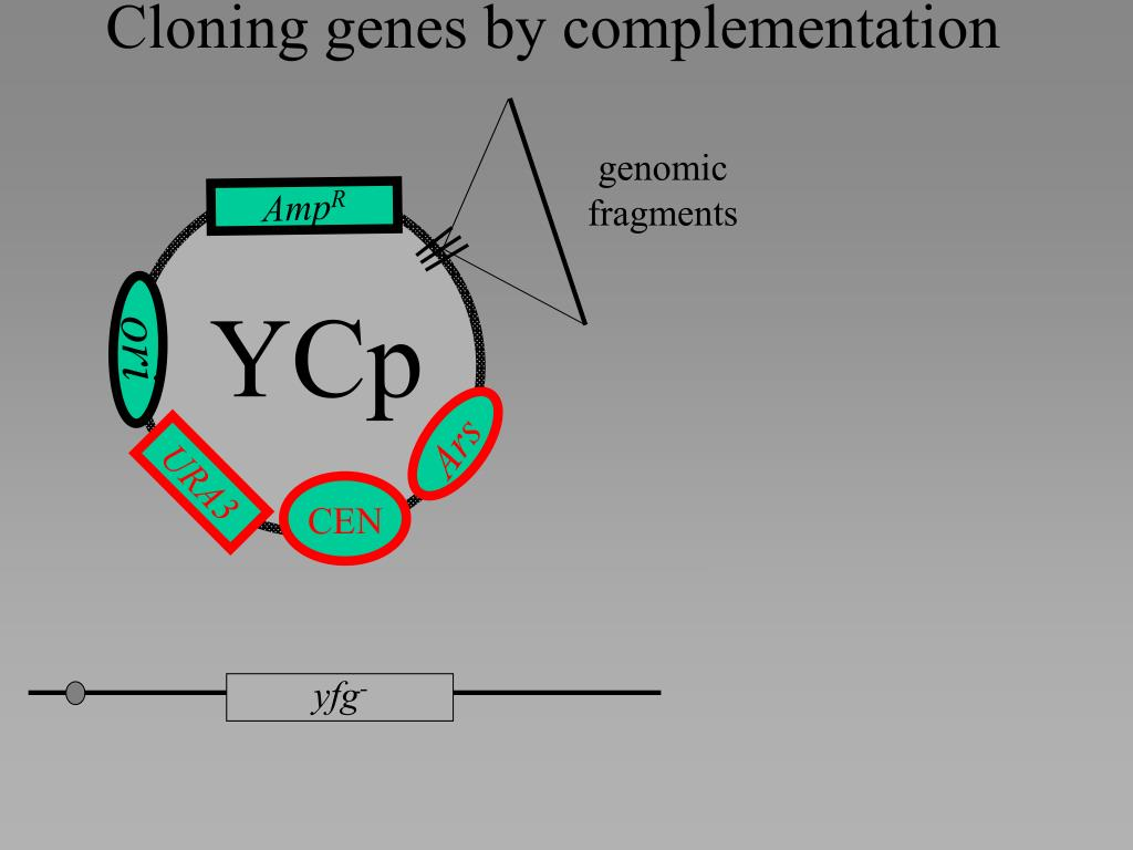 Cloning genes by complementation