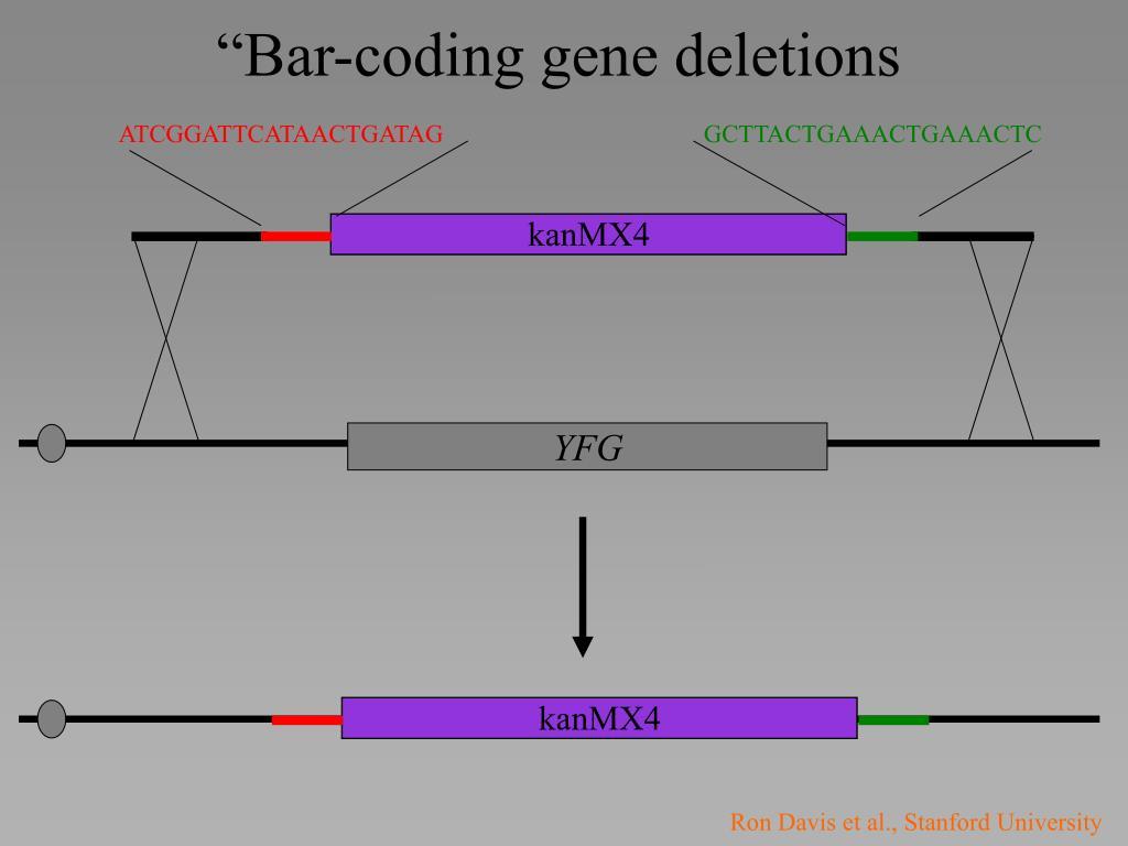 """Bar-coding gene deletions"
