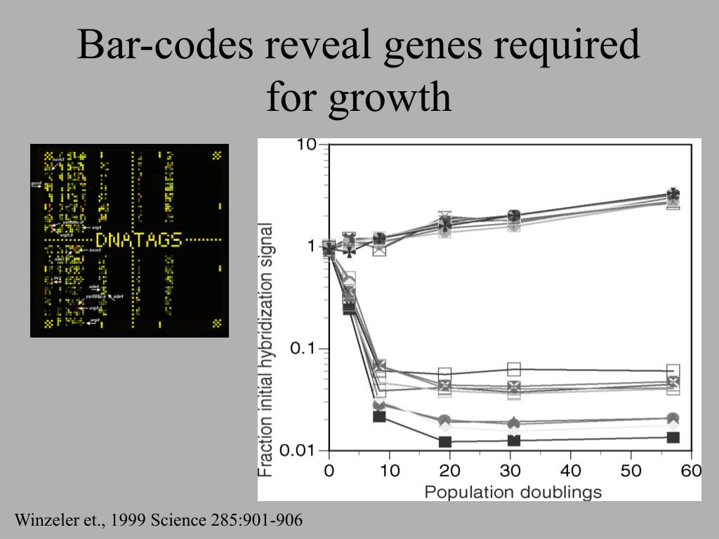 Bar-codes reveal genes required for growth