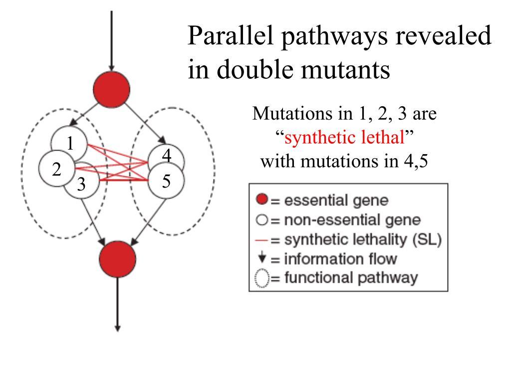 Parallel pathways revealed