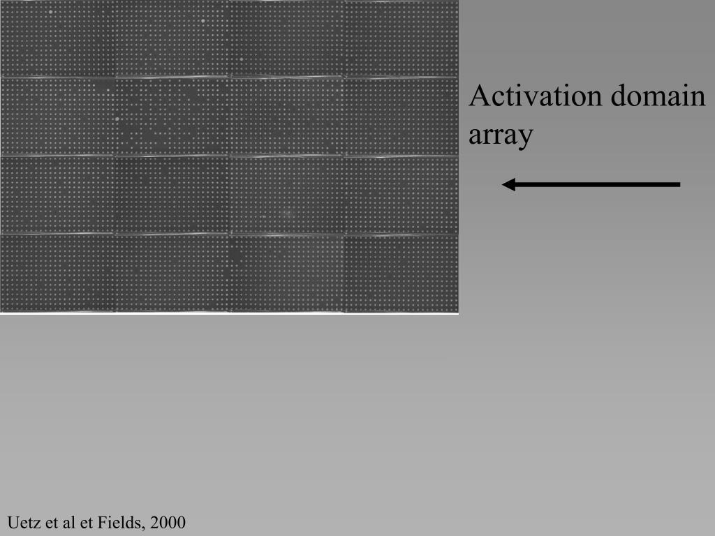 Activation domain