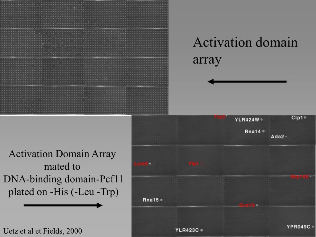 Activation Domain Array