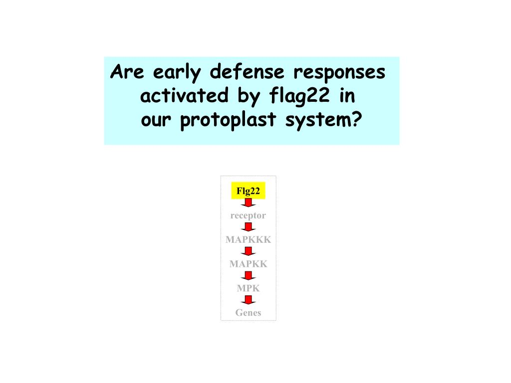 Are early defense responses