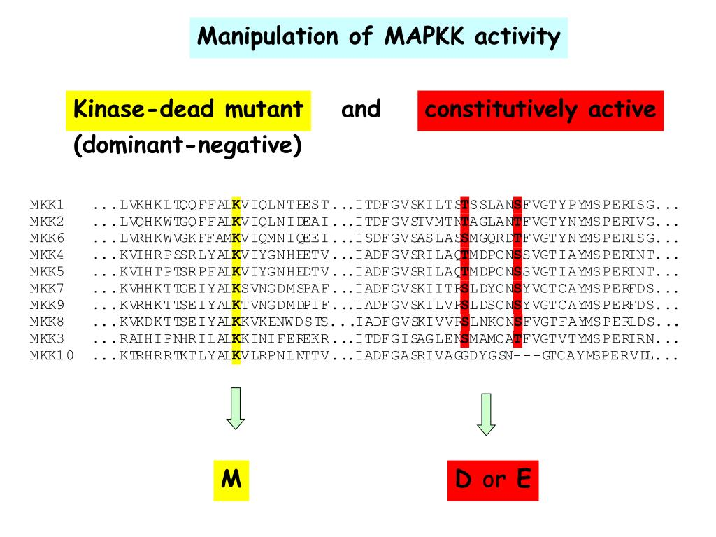 Manipulation of MAPKK activity
