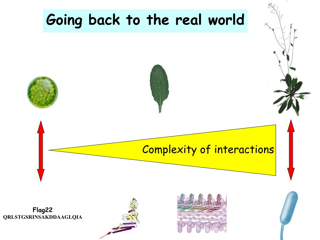 Complexity of interactions