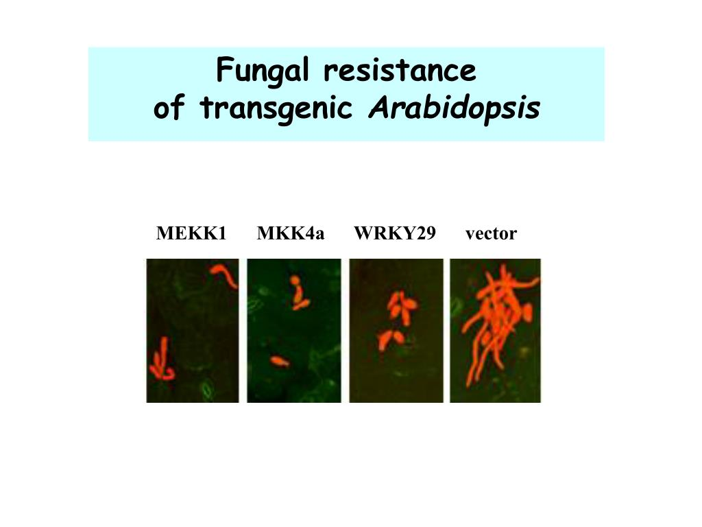 Fungal resistance