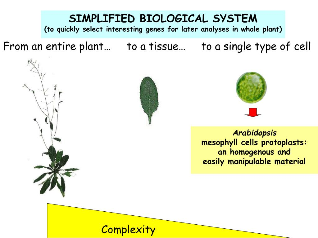 SIMPLIFIED BIOLOGICAL SYSTEM
