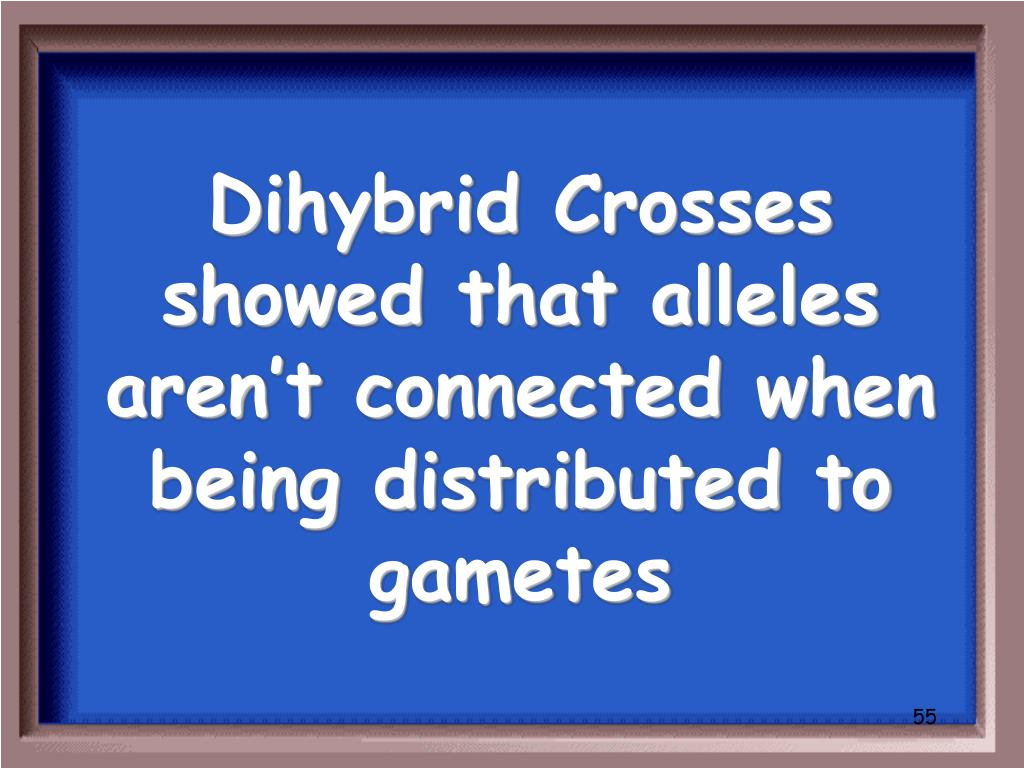 Dihybrid Crosses showed that alleles aren't connected when being distributed to gametes