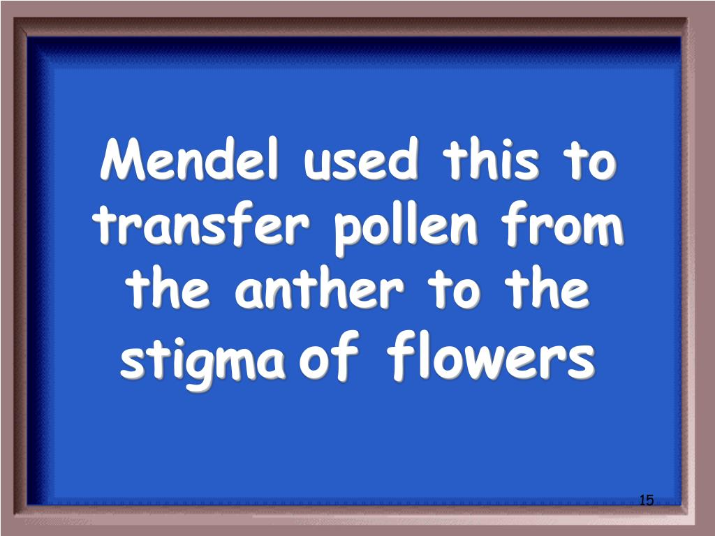 Mendel used this to transfer pollen from the anther to the stigma
