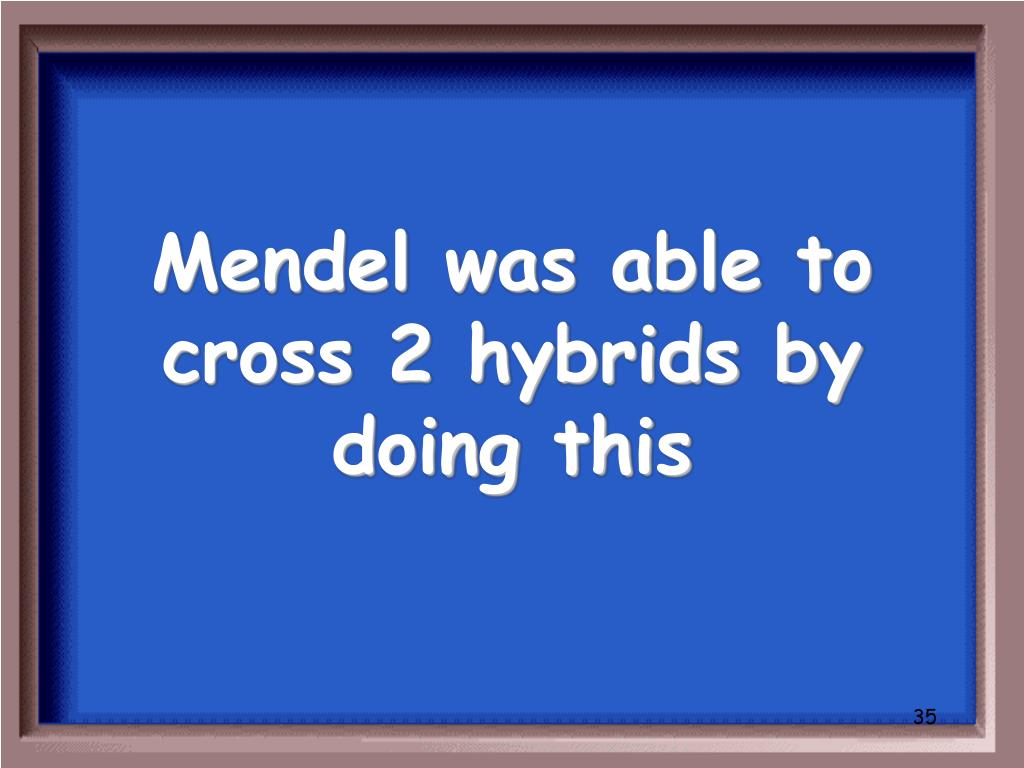 Mendel was able to cross 2 hybrids by doing this