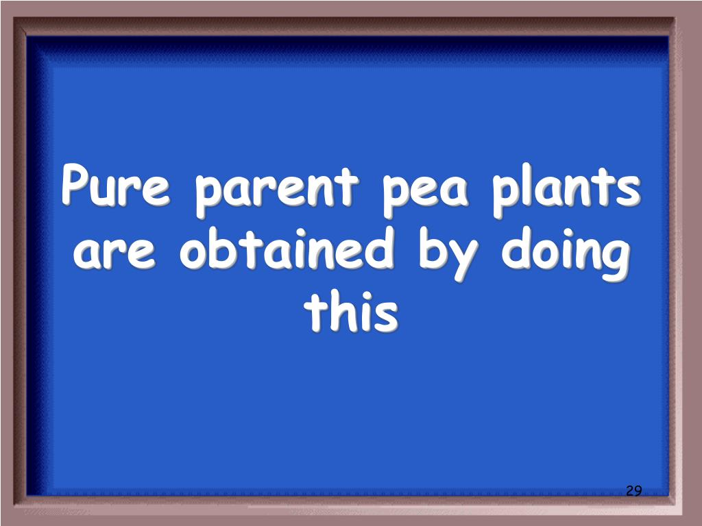 Pure parent pea plants are obtained by doing this