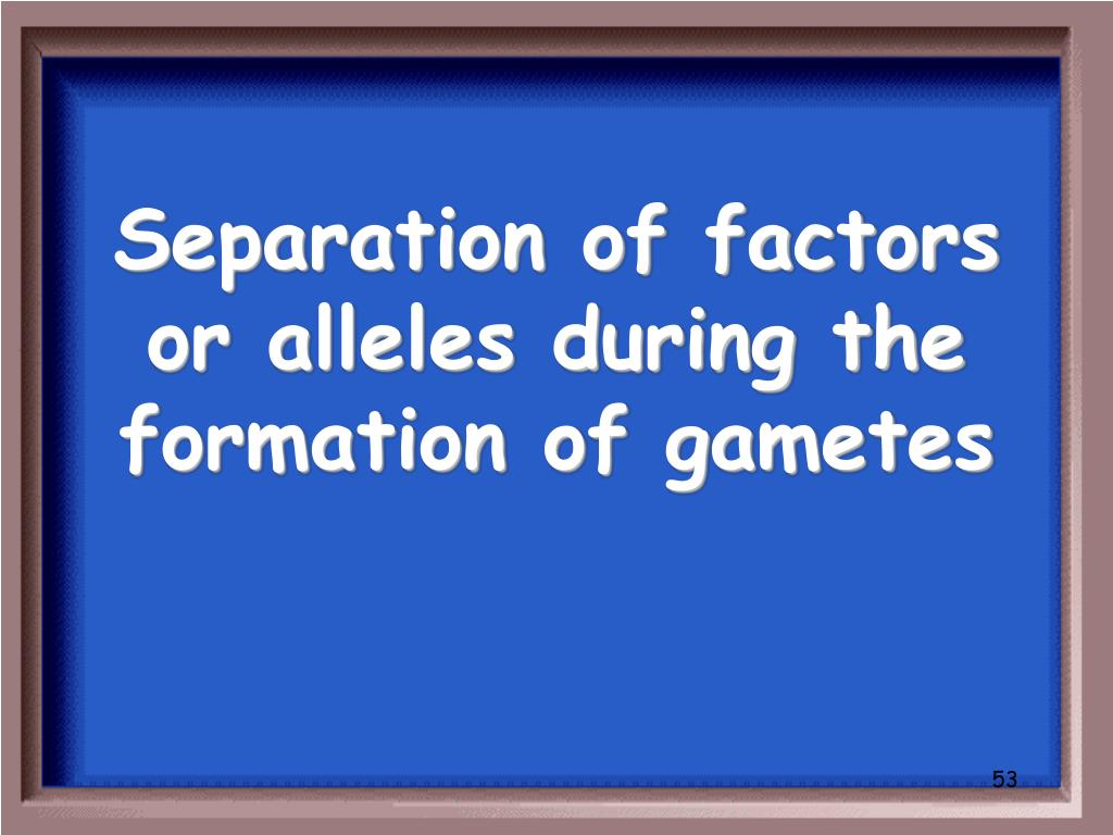 Separation of factors or alleles during the formation of gametes