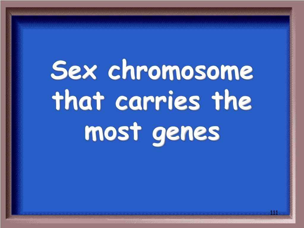 Sex chromosome that carries the most genes