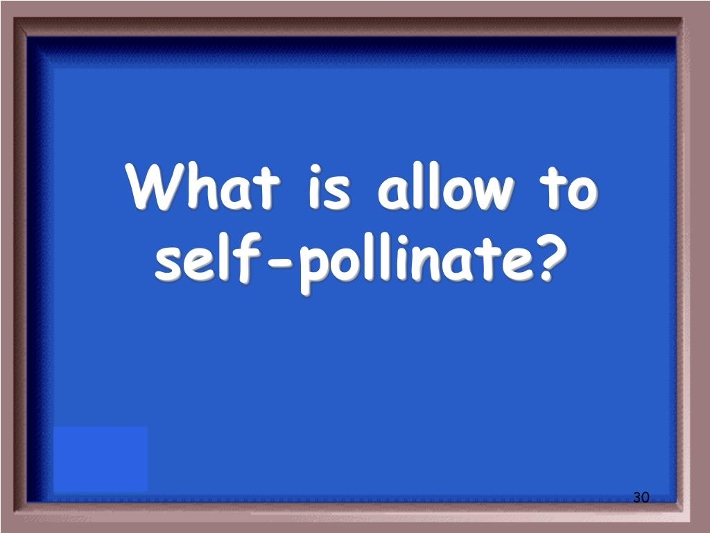 What is allow to self-pollinate?
