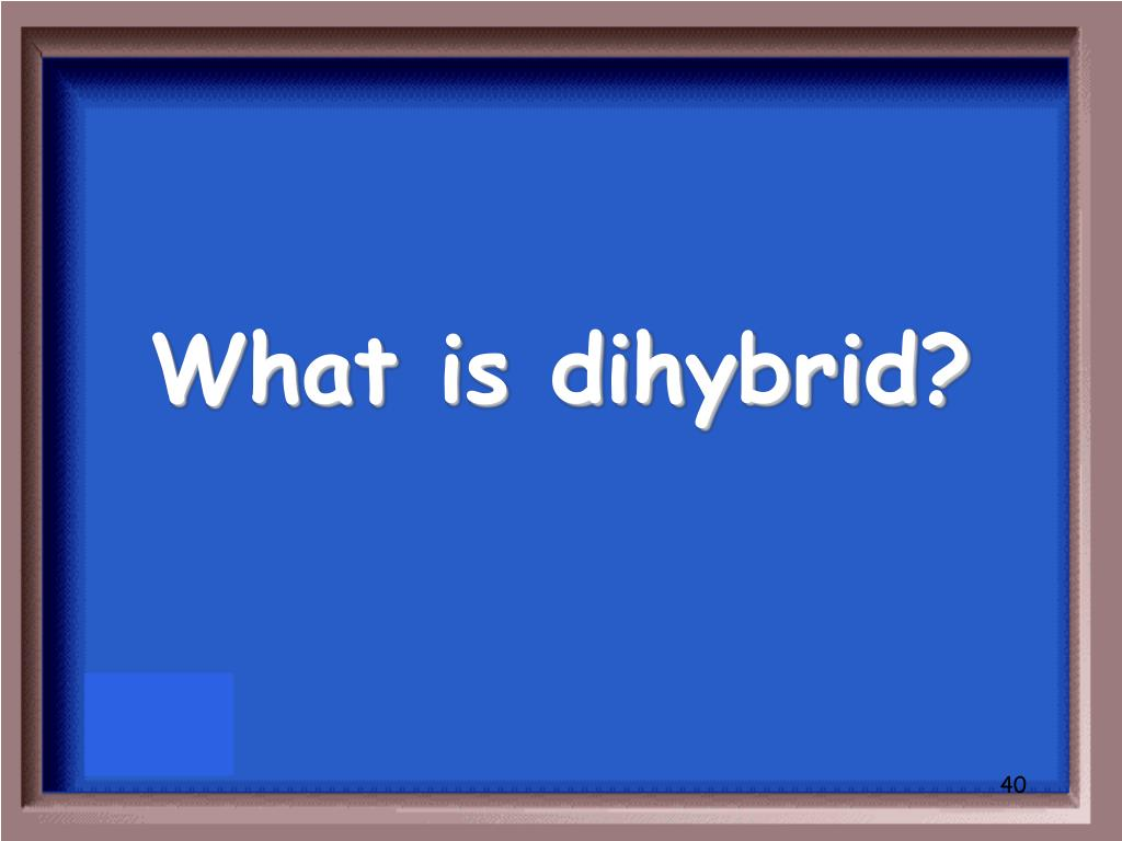What is dihybrid?