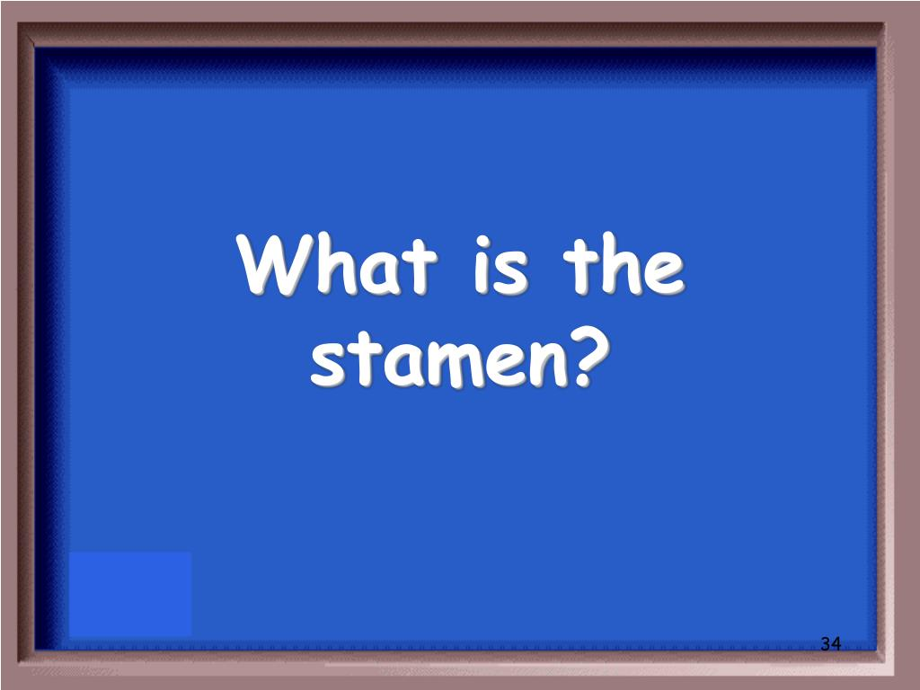 What is the stamen?