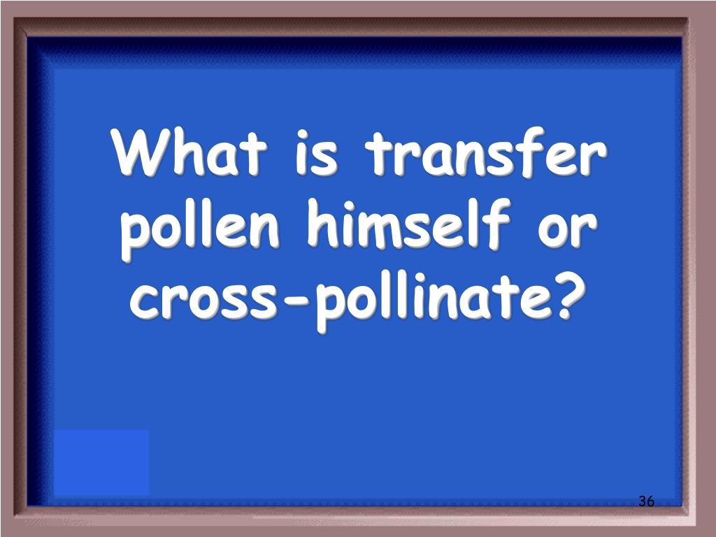 What is transfer pollen himself or cross-pollinate?
