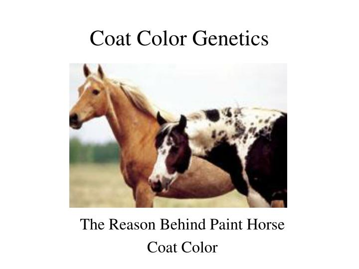 Coat color genetics l.jpg