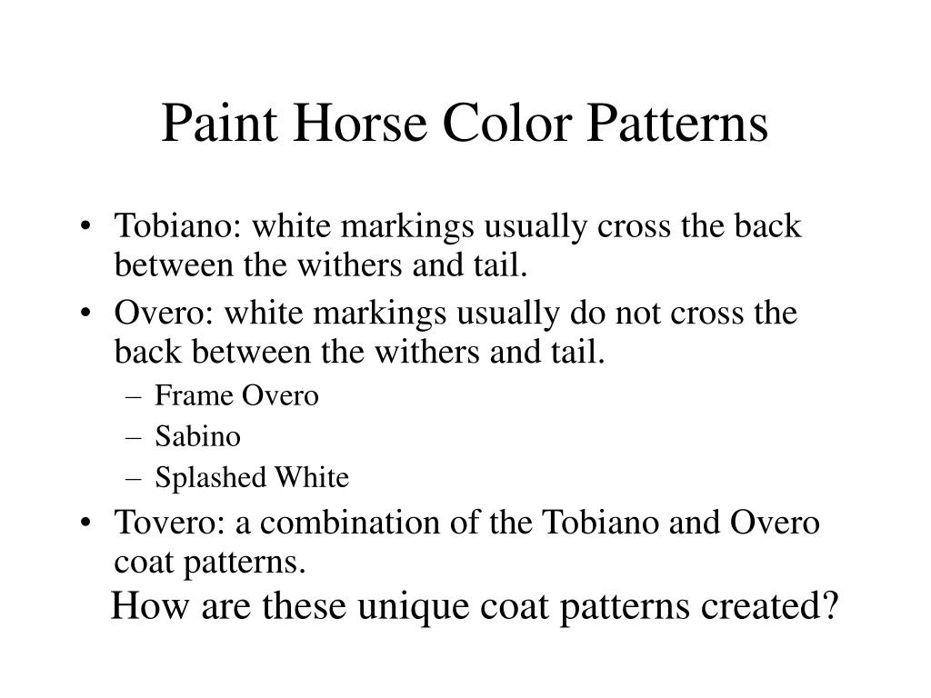 Paint Horse Color Patterns