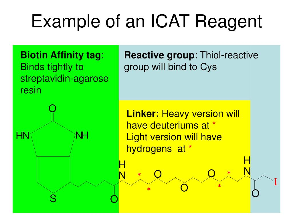 Example of an ICAT Reagent